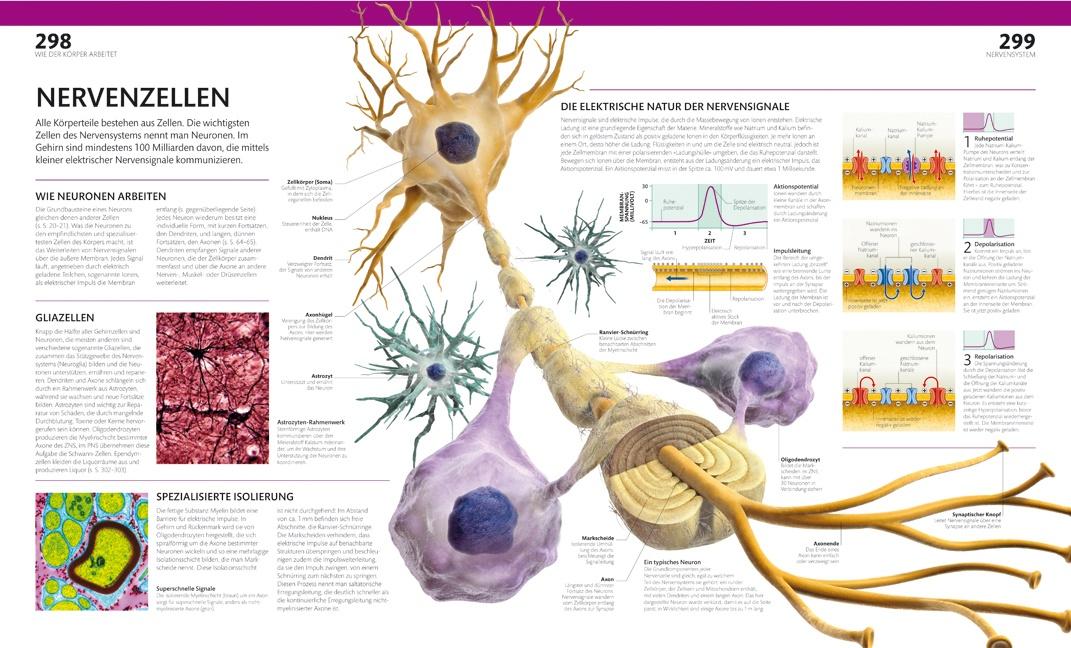 Anatomie und Physiologie - Die Bild-Enzyklopädie - Bücher - Diese ...